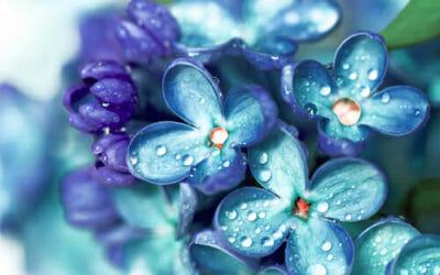 Fiori Azzurri.Il Pollice Verde Pagina 3