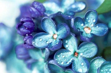 Quali sono i fiori azzurri più belli? Ecco la nostra selezione