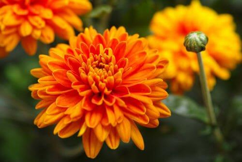 fiori arancioni