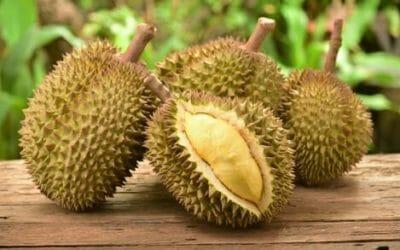 Cos'è il durian e quali sono le sue proprietà? La guida a questo frutto dal sapore (e dall'odore) particolare