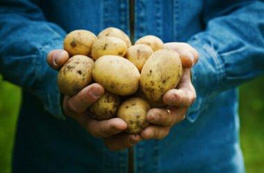 3 modi semplici per coltivare patate anche senza un orto o un giardino