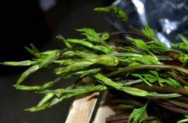 Ricette coi bruscandoli e proprietà di un'erba selvatica tutta da scoprire