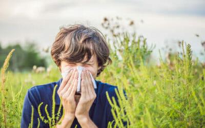Tutto sull'ambrosia e sulle reazioni allergiche che scatena