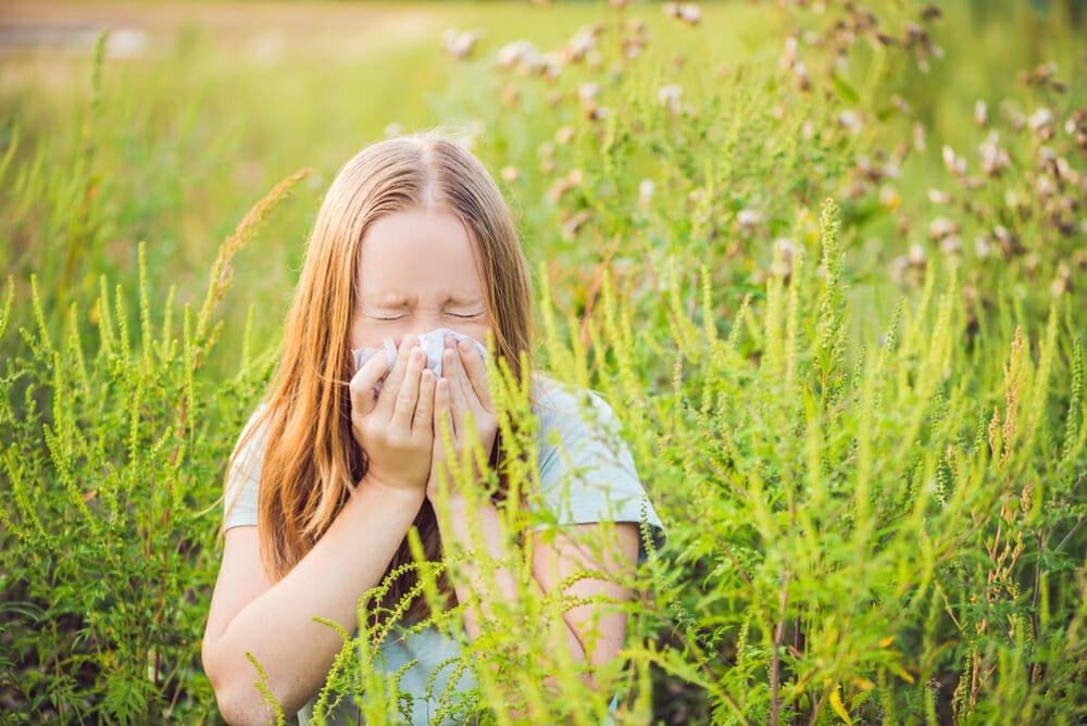 Photo of Tutto sull'ambrosia e sulle reazioni allergiche che scatena