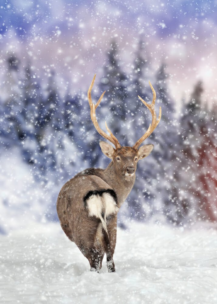 Photo of Tutto sul cervo, misterioso e affascinante animale ricco di simbologia