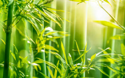 Tutti i vantaggi della fibra di bambù: una fibra di origine vegetale dalle innumerevoli proprietà