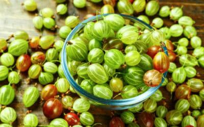 Tutto sull'uva spina, un frutto antiossidante dalle diverse proprietà benefiche