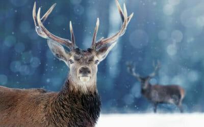 Tutto sul cervo, misterioso e affascinante animale ricco di simbologia