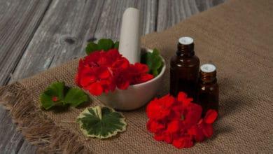 Photo of Come usare l'essenziale di geranio per la salute e le faccende di casa