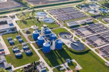 Cosa sono le biomasse e come vengono trasformate in energia: vantaggi e svantaggi