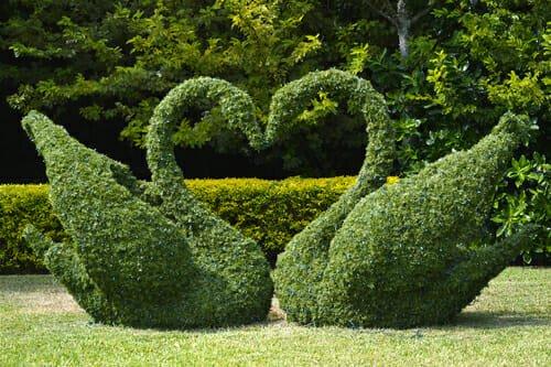 Photo of L'arte topiaria per rendere il giardino un'opera d'arte: la guida pratica