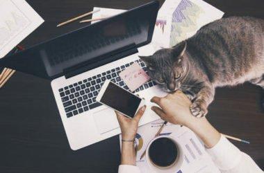 Con i gatti in ufficio si riduce lo stress: lo dice anche la scienza!