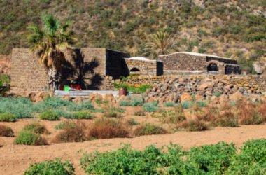 Dall'uva Zibibbo un eccellente vino da meditazione e non solo, prodotto soprattutto a Pantelleria