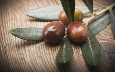 Olive taggiasche: dal sapore unico e utili contro il colesterolo cattivo