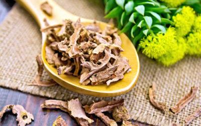 Tutti gli utilizzi della rodiola rosea, una pianta molto apprezzata in erboristeria