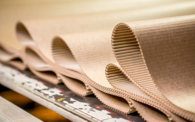 La cellulosa deriva dal legno ed è usata per fare carta, abiti, mobili, cibi e addirittura come biocarburante: conosciamola meglio