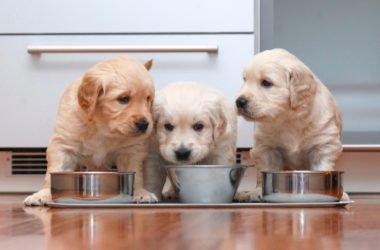 Alimentazione del cane: quali sono le basi? Come scegliere correttamente il cibo?