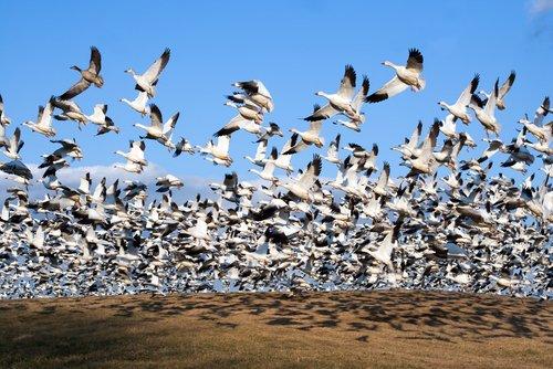 Photo of Quali sono gli animali che migrano e perché lo fanno?