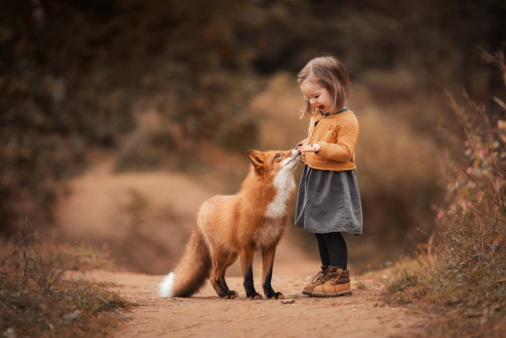 volpe rossa domestica