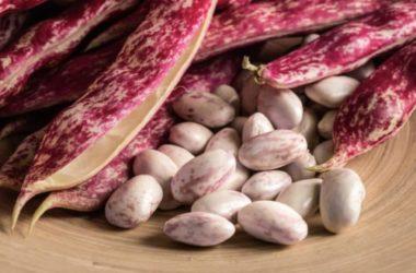 Tutto sui fagioli borlotti: dalle proprietà nutritive alle ricette consigliate