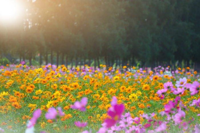 Fiori Gialli Di Campo Primaverili.Fiori Di Campo Ecco Quali Sono I Fiori Selvatici Da Conoscere