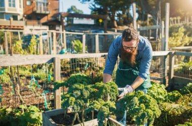 Agricoltura e orti urbani per socializzare e condividere tra cittadini, anche in azienda!