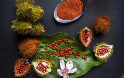 Conoscete i semi di annatto? Ricavati dall'achiote, sono una spezia e un colorante per gli alimenti e i tessuti