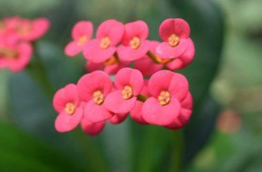 Alcune piante grasse fiorite da conoscere assolutamente: la guida facile