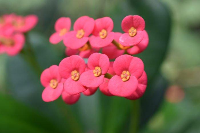 piante grasse fiorite