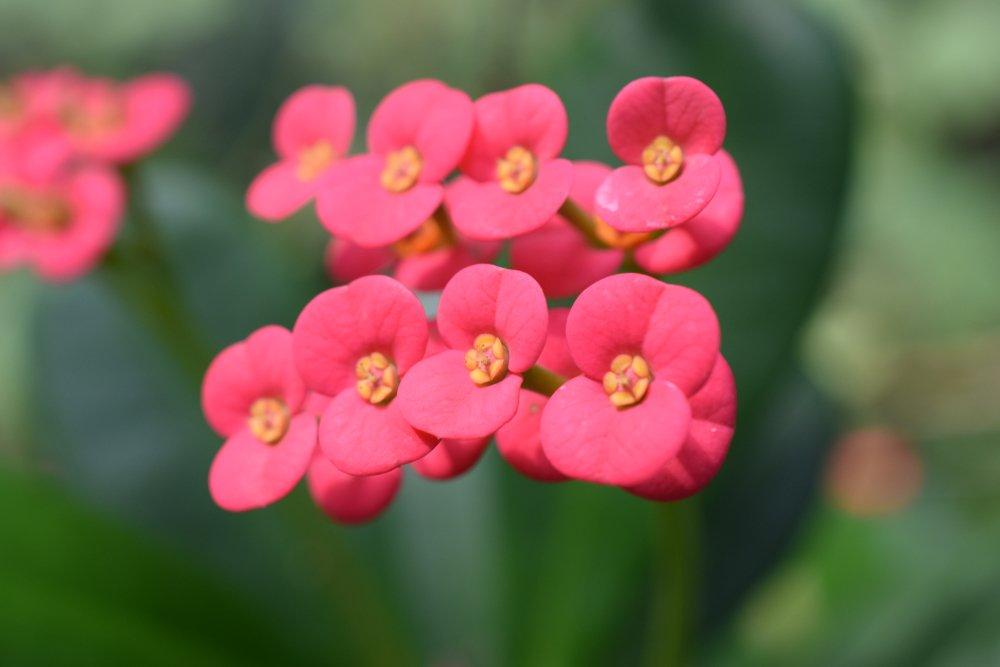 Photo of Alcune piante grasse fiorite da conoscere assolutamente: la guida facile
