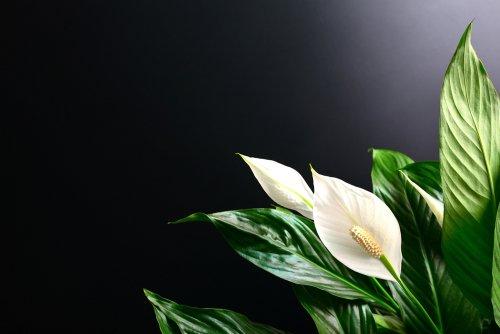 Photo of Piante tropicali: le varietà esotiche coltivabili anche in Italia