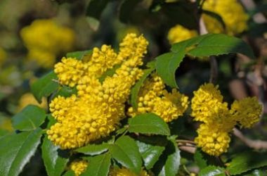 La guida completa alle piante ornamentali: tutto quello che serve per abbellire uno spazio verde