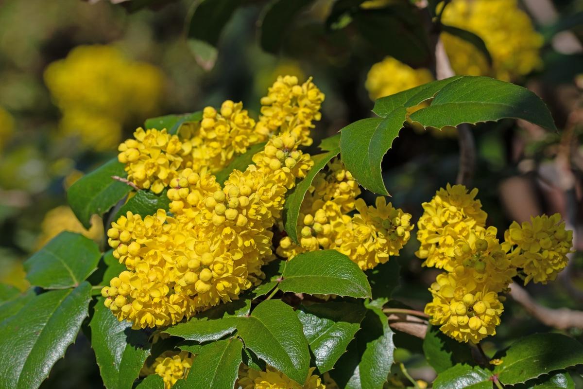 Clematis Resistenti Al Freddo piante ornamentali: le specie migliori per abbellire uno