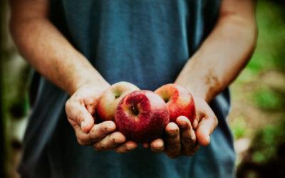 """Frutta biologica: vantaggi rispetto alla frutta """"normale"""""""