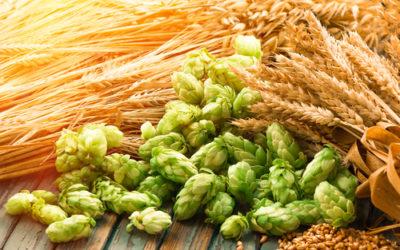 Malto: proprietà e usi del dolcificante naturale ricavato dai cereali