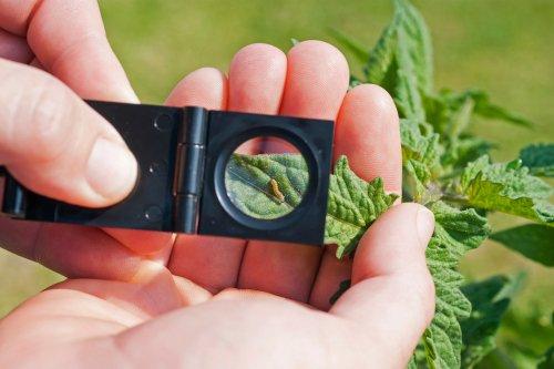Photo of Quali sono i più comuni parassiti delle piante e come combatterli naturalmente: la guida pratica