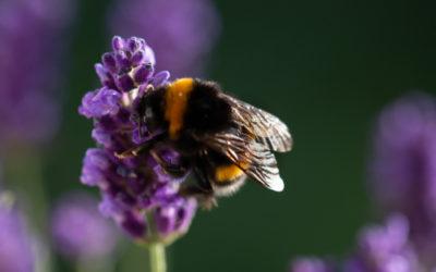 Impollinazione: i segreti di questa piccola, grande magia della natura