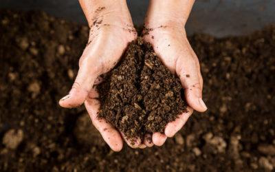 Scopriamo tutto sull'uso della torba e le sue proprietà nutritive per le piante