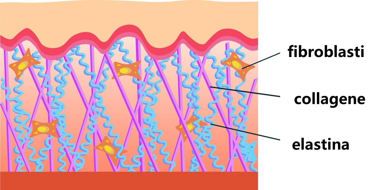 Photo of Tutto sull'elastina, una proteina naturale che dona elasticità alla pelle e la protegge dall'invecchiamento