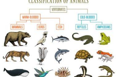Tassonomia: l'ABC delle scienze naturali di linneana memoria…