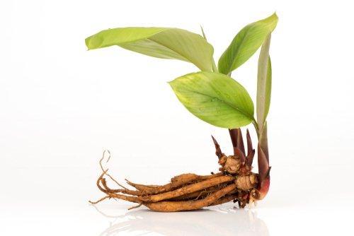 Photo of Rizoma: una piccola magia della Natura che permette alle piante di riprodursi anche in condizioni avverse