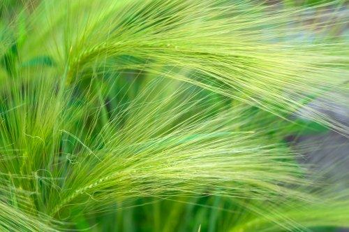 piante erbacee