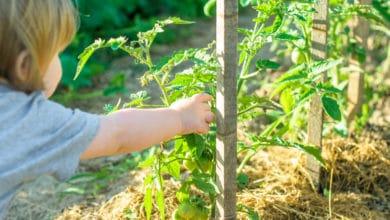 Photo of Guida ai vantaggi dell'agricoltura biologica, benefici e certificazioni