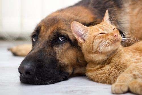I regolamenti relativi ad animali e condominio: tutto quello che c'è da sapere