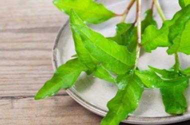 L'erba pepe è una pianta aromatica dall'odore acre da usare anche in cucina