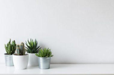 Cactus: le varietà più spettacolari di queste piante grasse ornamentali