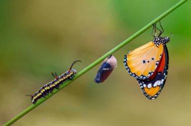 Metamorfosi, un'altra magia della Natura che si compie nel Regno Animale