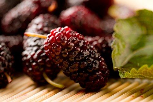 Photo of Sai cos'è un'infruttescenza e in cosa si distingue da un frutto? Ecco un altro interessante segreto di Natura
