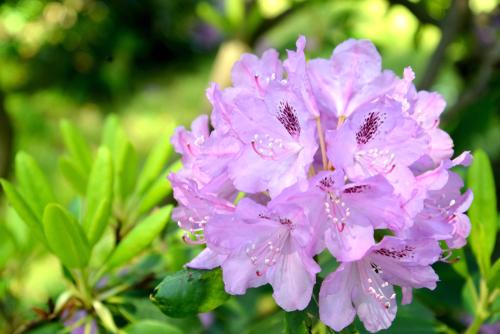 Che cos'è l'infiorescenza e a cosa serve alle piante