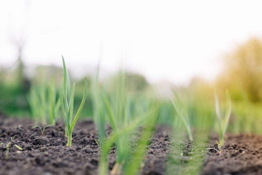 Photo of Quali sono i diversi tipi di terreno e a quali piante o coltivazioni si prestano?